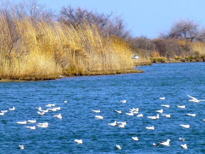 L'espace sauvage du delta du fleuve Pénée © YH