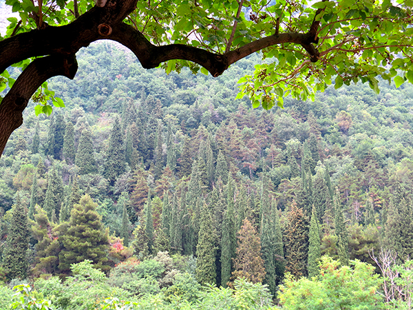 Entre vigne et forêts autour de Brescia