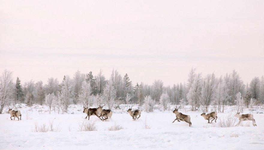 Laponie-finlande-rennes-finnair-les boomeuses-femmes-50 ans-webmagazine