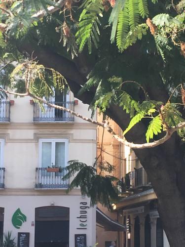 Photo d'une maison avec devant un arbre