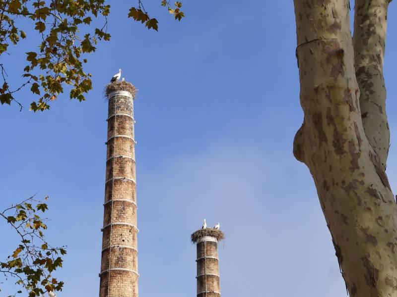 Deux oiseaux posées en haut d'une tour en brique au portugal les boomeuses