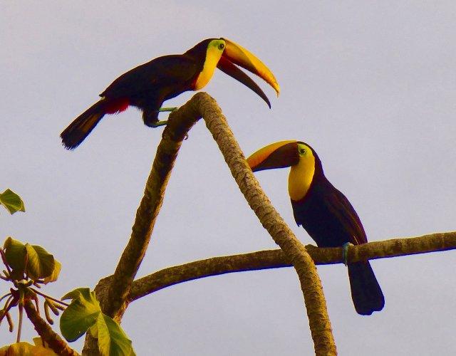 oiseau dans un parc au costa rica