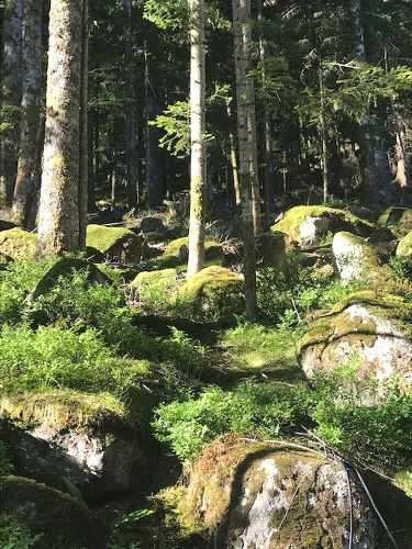 forêt des vosges