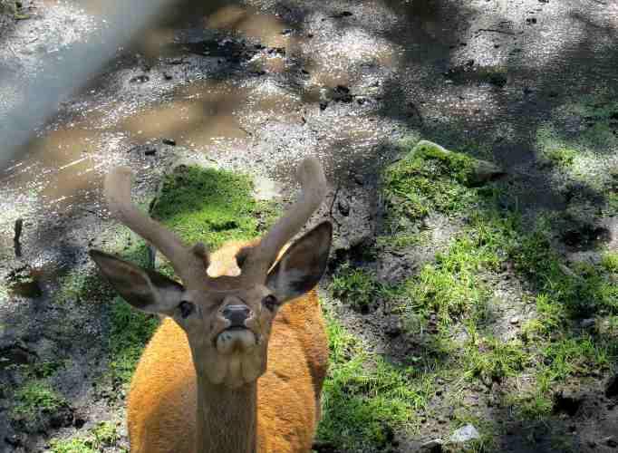 au zoo des marecottes